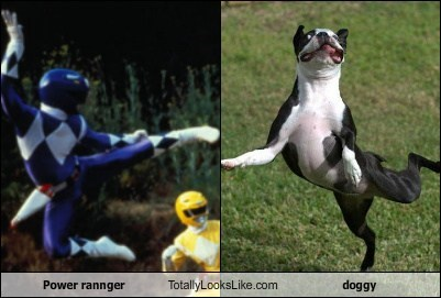 Power rannger  Totally Looks Like doggy