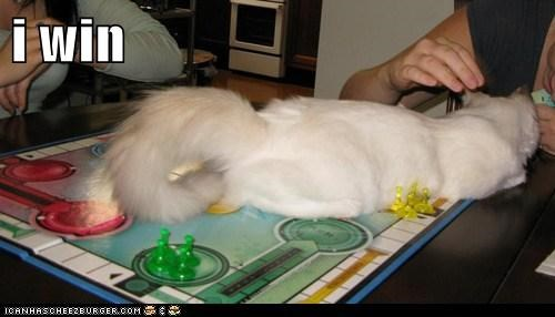board game,captions,Cats,comfort is relative,i win,lay,sorry
