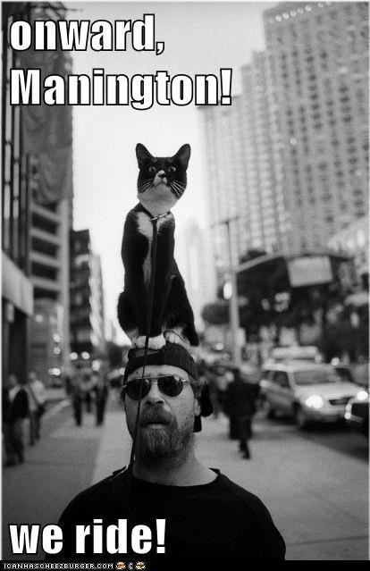 captions,Cats,city,horse,leash,nyc,ride,steed