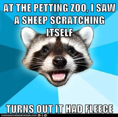 Animal Memes: Lame Pun Coon - Pulled the Wool Over My Eyes