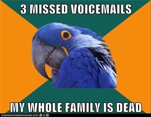 Animal Memes: Paranoid Parrot - And It's All My Fault