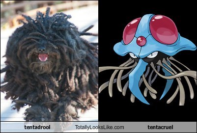 tentadrool Totally Looks Like tentacruel