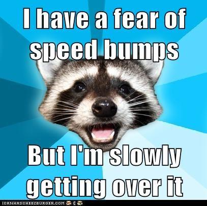 Animal Memes: Lame Pun Coon - It's Driving Me Crazy