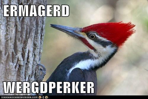 ERMAGERD  WERGDPERKER