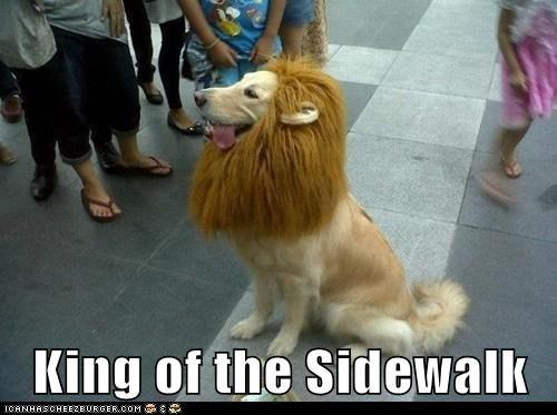 King of the Sidewalk