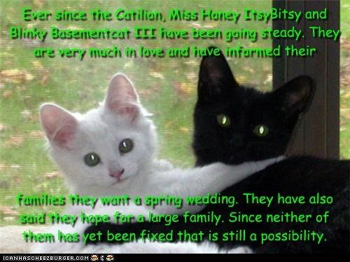 Ever since the Catilion, Miss Honey ItsyBitsy and Blinky Basementcat III have been going steady. They are very much in love and have informed their         families they want a spring wedding. They have also said they hope for a large family. Since neithe