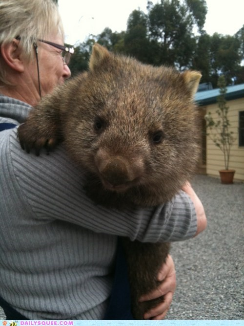cuddle,fuzzy,Hall of Fame,hugs,squee spree,Wombat