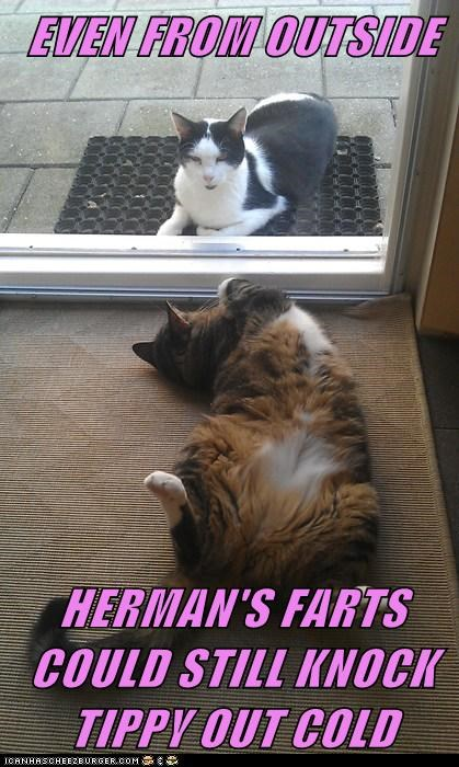 EVEN FROM OUTSIDE   HERMAN'S FARTS COULD STILL KNOCK TIPPY OUT COLD