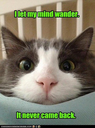 Lolcats: I let my mind wander.