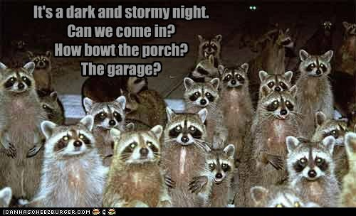 begging,cold,come in,dark and stormy night,garage,pleading,porch,raccoons