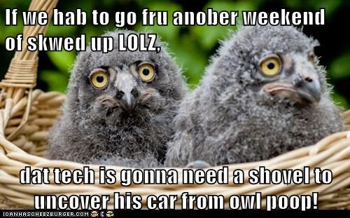 If we hab to go fru anober weekend of skwed up LOLZ,   dat tech is gonna need a shovel to uncover his car from owl poop!