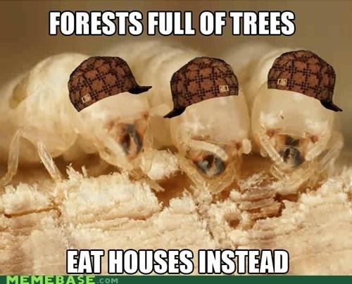 Scumbag Termites