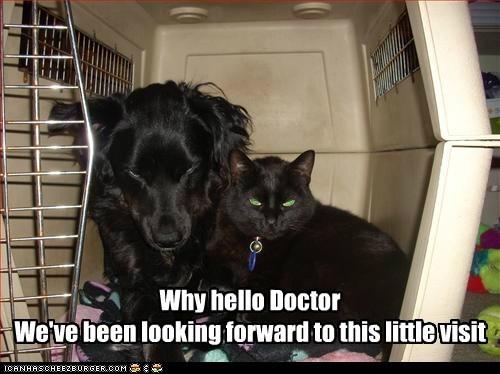 cat,crate,dogs,evil plotting,vet,what breed