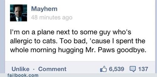 allergies,cat,mayhem