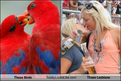 These Birds Totally Looks Like These Lesbians