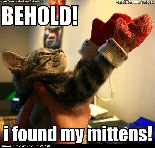 behold,best of the week,captions,Cats,gloves,lolcats,mittens