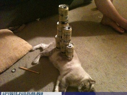 Crunk Critters: Coors Cat is Conked Out