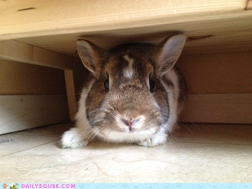 Reader Squee: Hide and Seek