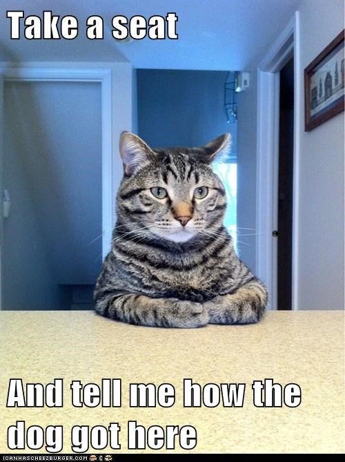 Animal Memes: Chris Hansen Cat - We Had an Agreement