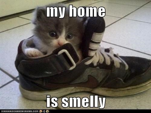 my home  is smelly