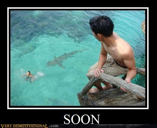 diving,Pure Awesome,shark,SOON,water