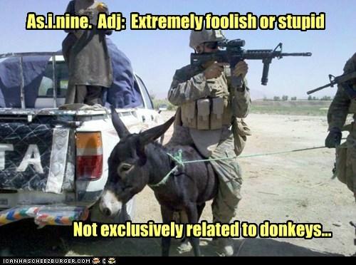 asinine,ass,definition,donkey,exclusive,foolish,stupid