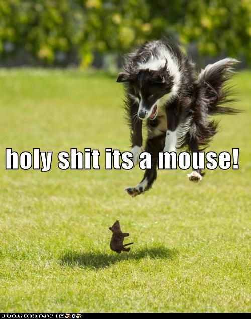 holy shit its a mouse!