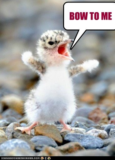 baby bird,bow,captions,duckling,respect my authority,tyrant