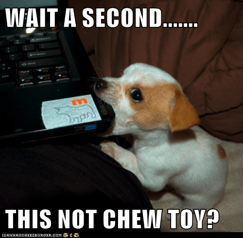 WAIT A SECOND.......  THIS NOT CHEW TOY?