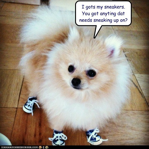 blue,dogs,pomeranian,shoes,sneakers,sneaking out