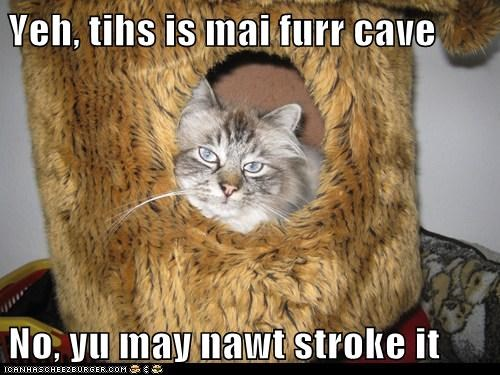 Yeh, tihs is mai furr cave  No, yu may nawt stroke it