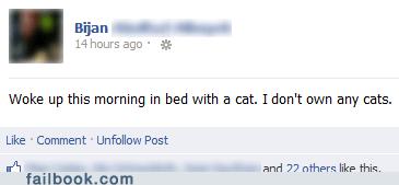 cat,Cats,wild night