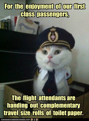 Animal Memes: Captain Kitteh: They Really Do Get All the Perks