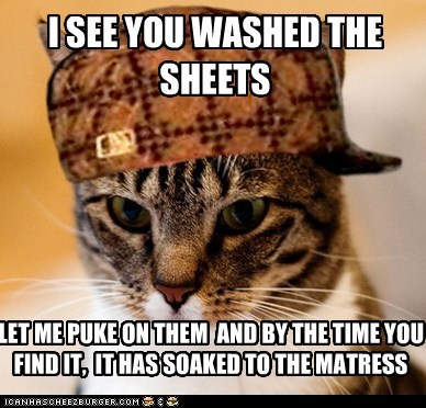 Scumbag Cat: That's What You Get for Making the Bed