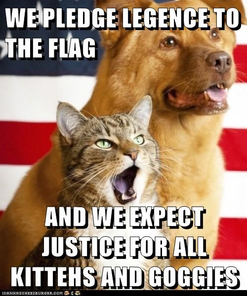 WE PLEDGE LEGENCE TO THE FLAG    AND WE EXPECT JUSTICE FOR ALL KITTEHS AND GOGGIES