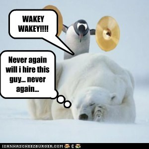 alarm,alarm clock,annoyed,cymbals,never again,penguin,polar bear,tired,waking up