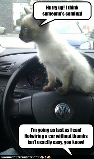 captions,car,Cats,Grand Theft Auto,hotwire,steal,thumbs