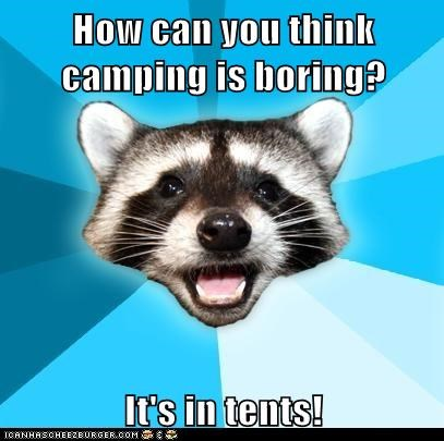 Animal Memes: Lame Pun Coon - To Be Fair, He's All About Camp