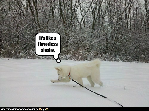 "I Has A Hotdog: Wat iz ""snow""?"