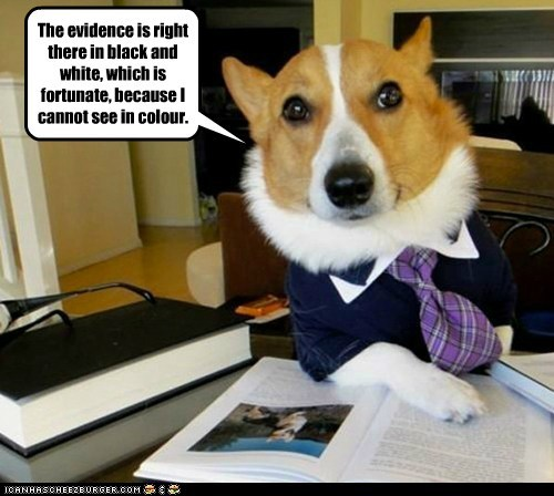 Animal Memes: Lawyer Dog - You Got Lucky On This Case