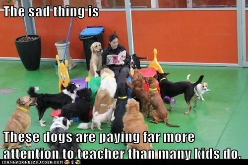 The sad thing is  These dogs are paying far more attention to teacher than many kids do.