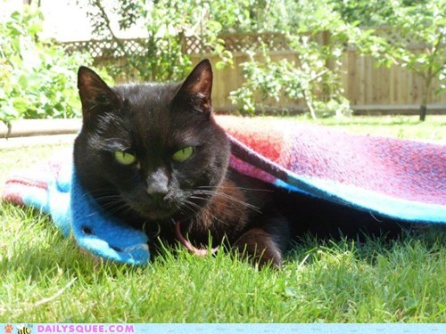 blanket,cat,grass,outside,pet,reader squee