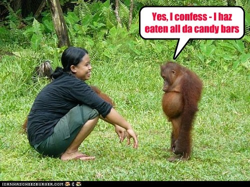 candy bars,confession,eaten,fat,laughing,orangutan