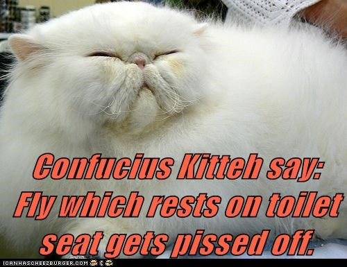 Confucius Kitteh say:                Fly which rests on toilet seat gets pissed off.