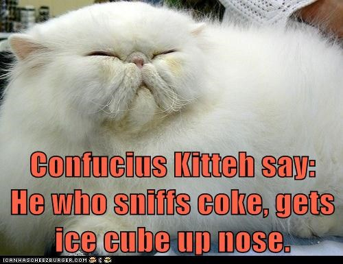 Confucius Kitteh say:             He who sniffs coke, gets ice cube up nose.