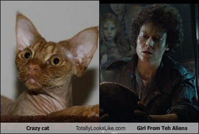 Crazy cat Totally Looks Like Girl From Teh Aliens