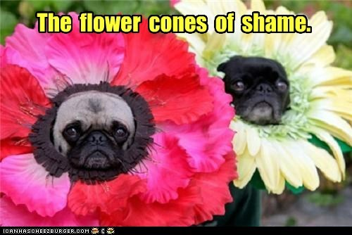 cone of shame,costume,dogs,flowers,pugs