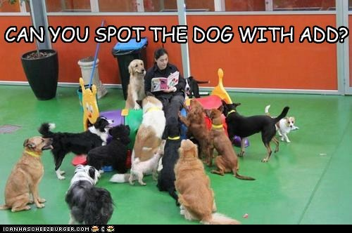 CAN YOU SPOT THE DOG WITH ADD?
