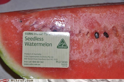 are you serious,seedless watermelon,watermelon
