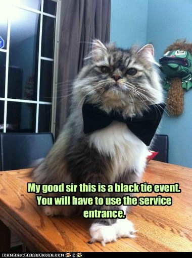 black tie,captions,cater,catering,Cats,fancy,food,waiter